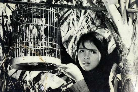 Con Chim Vành Khuyên (1962)