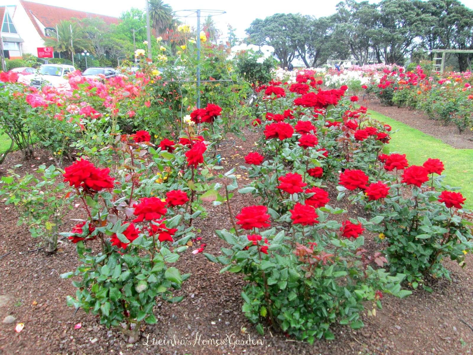 Top Jardim da Lucinha GA53